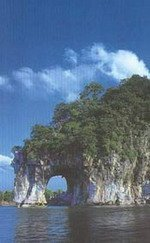 Хобот слона